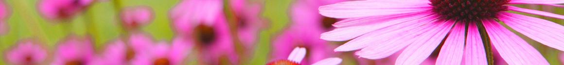 inicio-ventaonline-plantas