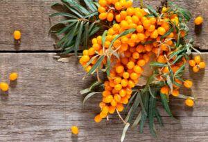 Espino Amarillo: Propiedades del Aceite