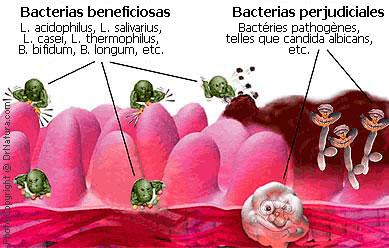 Probióticos, Prebióticos y Simbióticos Elie Metchnikoff